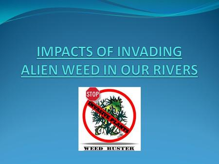Indigenous verse Alien An Indigenous plant refers to a plant which naturally grows in an area/country.