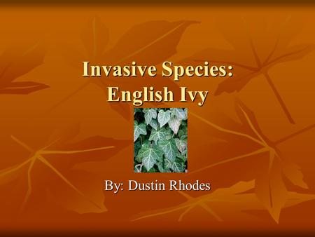 Invasive Species: English Ivy By: Dustin Rhodes. Maiden Name Hedera helix Hedera helix  ants/noxious-weeds/weed-identification/english-