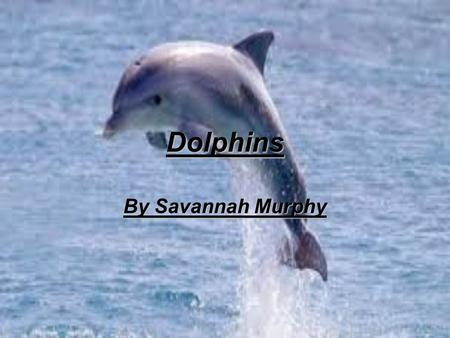 Dolphins By Savannah Murphy.