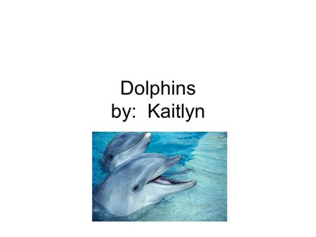Dolphins by: Kaitlyn. My report is on Dolphins. I chose Dolphins because I love Dolphins. I hope you will enjoy finding out facts about Dolphins.