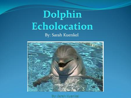 By: Sarah Kuenkel Dolphins' echolocation is helpful and amazing in many ways. They use echolocation to communicate just like people use words to communicate.