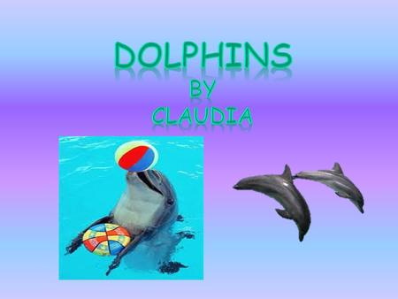 Dolphins by claudia.