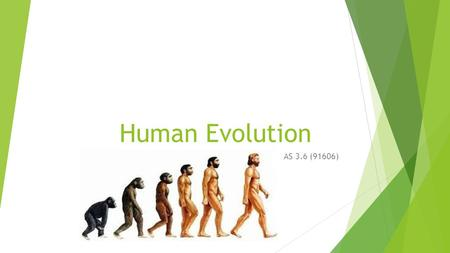 Human Evolution AS 3.6 (91606). Classification of the primates  Primates are distinguished by their adaptations to arboreal (tree) life.