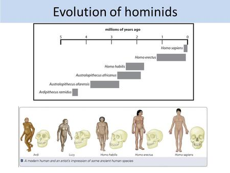 Evolution of hominids. 2.14 Describe the evidence for human evolution, based on fossils, including: a Ardi from 4.4 million years ago b Lucy from 3.2.