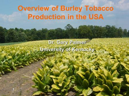 Overview of Burley Tobacco Production in the USA