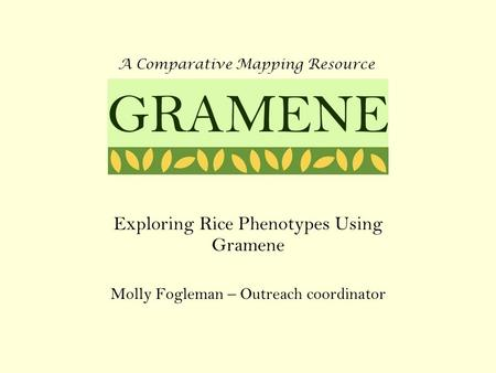 Exploring Rice Phenotypes Using Gramene Molly Fogleman – Outreach coordinator A Comparative Mapping Resource GRAMENE.