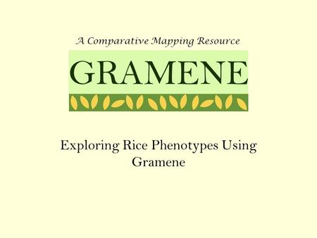 Exploring Rice Phenotypes Using Gramene A Comparative Mapping Resource GRAMENE.