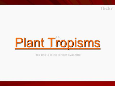 Plant Tropisms. What are we talking about? Tropism - directional growth of a plant, or part of a plant, in response to an external stimulus.