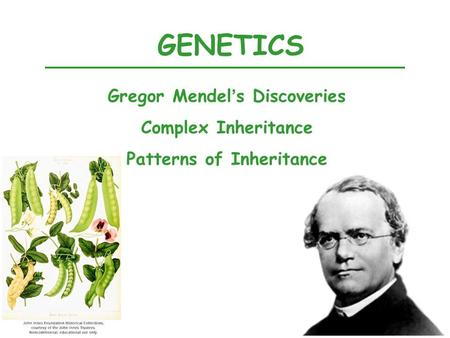 GENETICS Gregor Mendel's Discoveries Complex Inheritance Patterns of Inheritance.