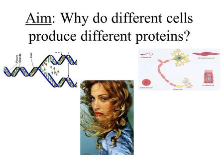 Aim: Why do different cells produce different proteins?