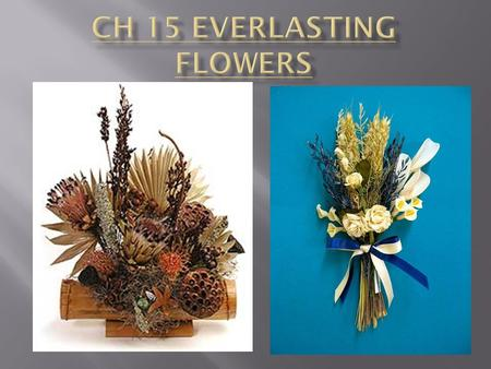  Preserved flowers  Silk flowers  Dried flowers.