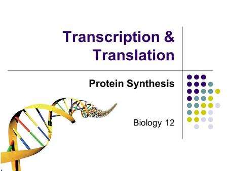 Transcription & Translation Protein Synthesis Biology 12.