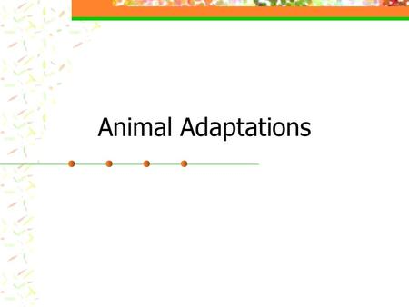 Animal Adaptations. Adaptation A characteristic that helps an organism survive in its environment or reproduce. An animal must respond to its environment.
