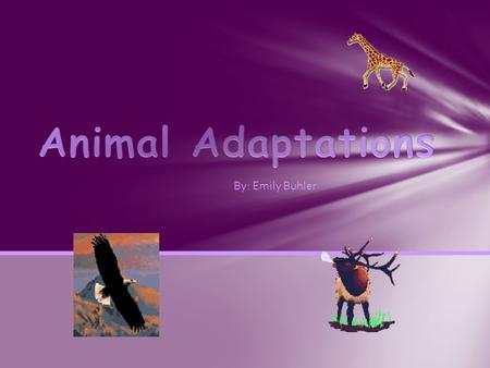 By: Emily Buhler. Structural Adaptations Behavioural Adaptations Migration Mimicry Hibernation The 6 Adaptations.