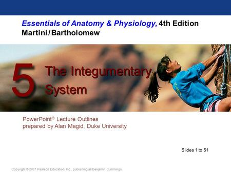 Essentials of Anatomy & Physiology, 4th Edition Martini / Bartholomew PowerPoint ® Lecture Outlines prepared by Alan Magid, Duke University The Integumentary.