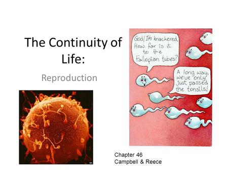 The Continuity of Life: Reproduction Chapter 46 Campbell & Reece.