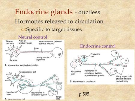 Endocrine glands - ductless Hormones released to circulation  Specific to target tissues Endocrine control Neural control p.505.