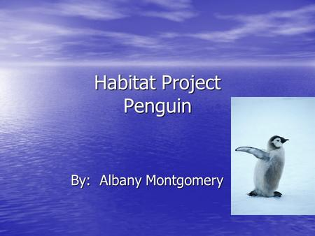 Habitat Project Penguin By: Albany Montgomery. Habitat Penguins lives in the Arctic. Penguins lives in the Arctic. It is cold were they live. It is cold.