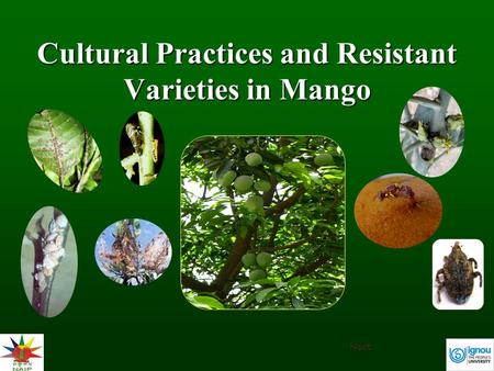 Cultural Practices and Resistant Varieties in Mango Next.