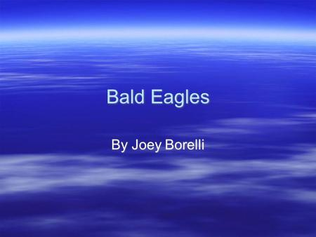 Bald Eagles By Joey Borelli In class I have been researching the bald eagle. In this report I will tell you facts about the bald eagle. You will learn.