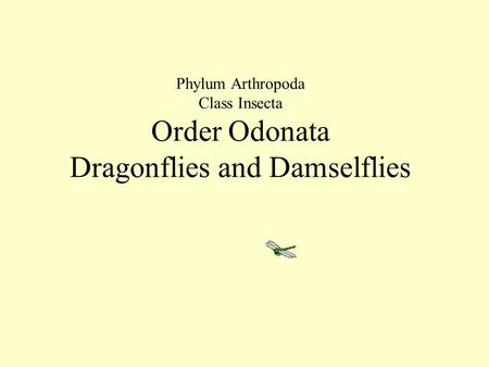 Phylum Arthropoda Class Insecta Order Odonata Dragonflies and Damselflies.