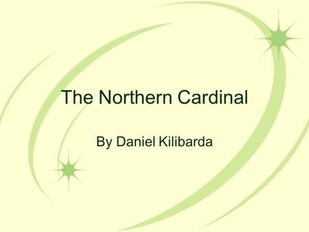 The Northern Cardinal By Daniel Kilibarda. Stages of Life Introduction A flash of red, a loud, metallic chirp, followed by a quick flight onto the ground.