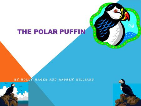 THE POLAR PUFFIN BY MOLLY MAGEE AND ANDREW WILLIAMS.