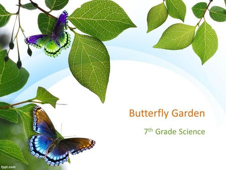 Butterfly Garden 7 th Grade Science. Butterfly Journey  mation_fall2013_roosts.html