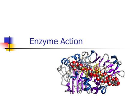 Enzyme Action. What you should learn How biochemical reactions are catalysed by enzymes. The precise role of active sites. Types of enzyme inhibition.
