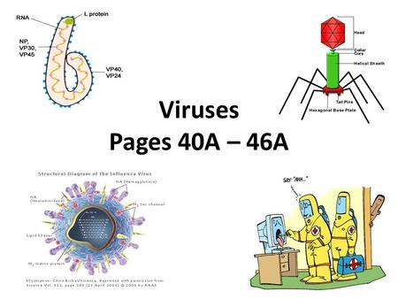 Viruses Pages 40A – 46A. What is a virus? A virus is a tiny, non-living particle that enters and then reproduces inside a living cell. No organism is.