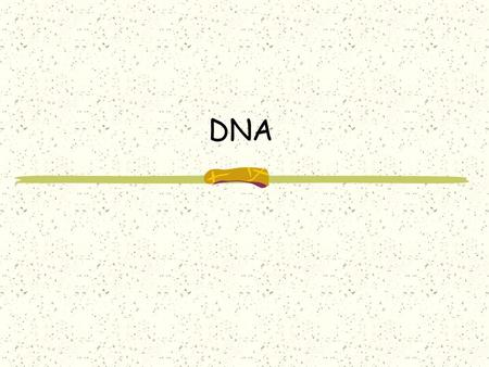 DNA What is DNA? DNA stands for deoxyribonucleic acid It stores all of our genetic information It's function is to tell the cell what proteins to make.