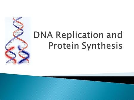  After describing the structure of DNA, they released a second paper ◦ Basically stated that the base pairing model indicated a method for replication.