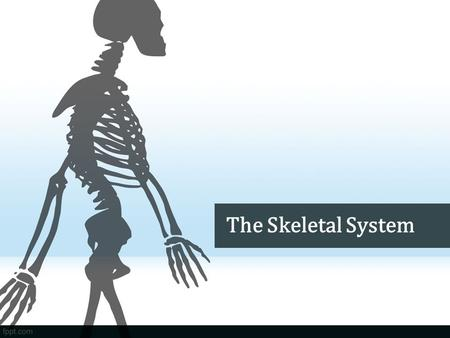 The Skeletal System. Do Now What is the job of the frame/walls of a building? Why do you think we have bones? What do you think would happen if we didn't.