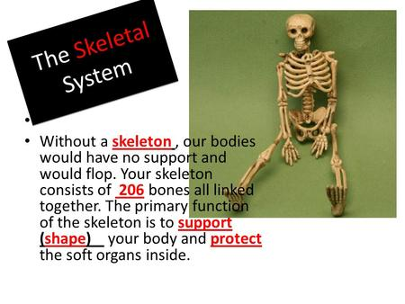 The Skeletal System Without a skeleton, our bodies would have no support and would flop. Your skeleton consists of 206 bones all linked together. The primary.