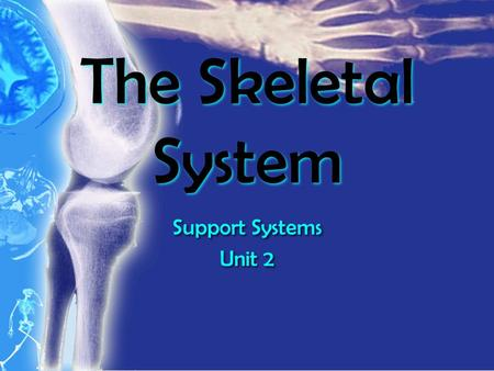 The Skeletal System Support Systems Unit 2 Support Systems Unit 2.