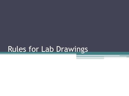 Rules for Lab Drawings. Use white, unlined paper. Always use a pencil and erase all changed work. Never use ink.
