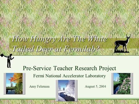 How Hungry Are The White Tailed Deer at Fermilab? Pre-Service Teacher Research Project Fermi National Accelerator Laboratory Amy Fehrman August 5, 2004.