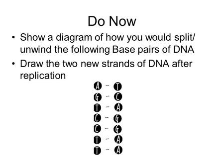 Do Now Show a diagram of how you would split/ unwind the following Base pairs of DNA Draw the two new strands of DNA after replication.