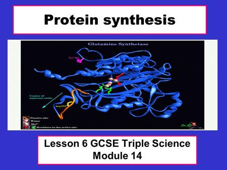 Protein synthesis Lesson 6 GCSE Triple Science Module 14.
