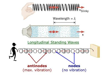 Longitudinal Standing Waves antinodes (max. vibration) nodes (no vibration)