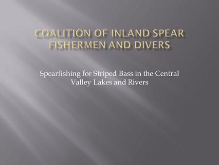 Spearfishing for Striped Bass in the Central Valley Lakes and Rivers.