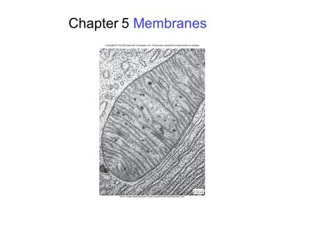 Chapter 5 Membranes. 2 Membrane Structure Phospholipids arranged in a bilayer Globular proteins inserted in the lipid bilayer Fluid mosiac model – mosaic.