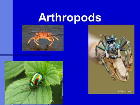 Arthropods. What is Entomology? The study of insects (and their near relatives). What are insects (and near relatives)? Insects and their relatives are.