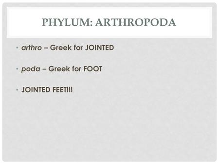 PHYLUM: ARTHROPODA arthro – Greek for JOINTED poda – Greek for FOOT JOINTED FEET!!!