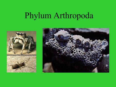 Phylum Arthropoda Arthropoda Includes… Spiders, scorpions, ticks, mites, crustaceans, millipedes, centipedes, insects.