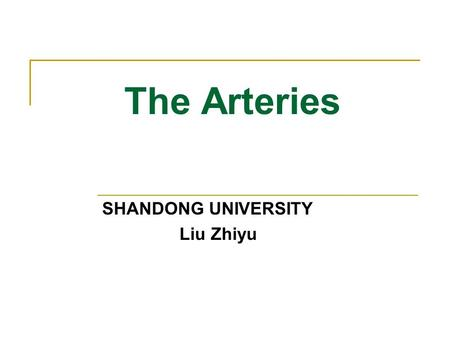The Arteries SHANDONG UNIVERSITY Liu Zhiyu. The Arteries Characteristics Symmetry In the trunk of the body consist parietal and visceral branches Shortest.