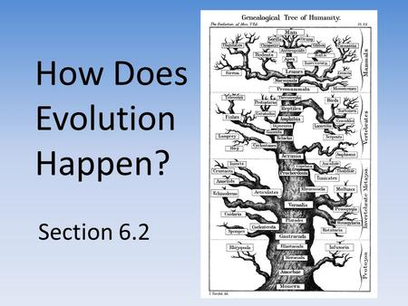 How Does Evolution Happen? Section 6.2. Discussion Describe a dinosaur. Why are there no dinosaurs alive today? Why do you think dinosaurs became extinct?