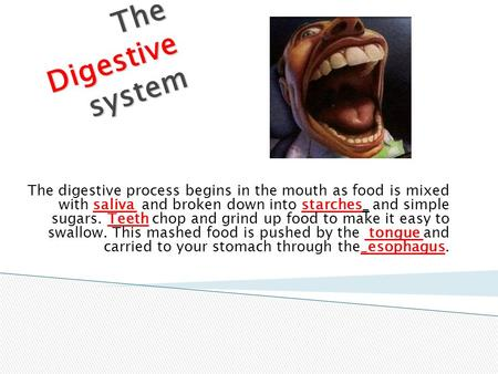 The Digestive system The digestive process begins in the mouth as food is mixed with saliva and broken down into starches_ and simple sugars. Teeth chop.