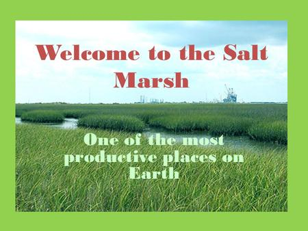 Welcome to the Salt Marsh One of the most productive places on Earth.