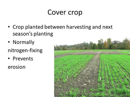 Cover crop Crop planted between harvesting and next season's planting Normally nitrogen-fixing Prevents erosion.